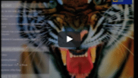 USWeb Maven Networks Marketing Video features a fierce close up of a orange and black roaring tiger, mouth open, tongue out and very large top fangs.